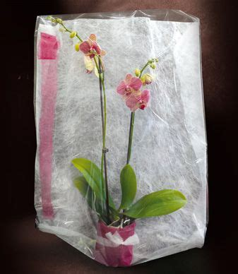 atelier du fleuriste voile de mistral a lovely way to gift flowers clayrtons diy orchid