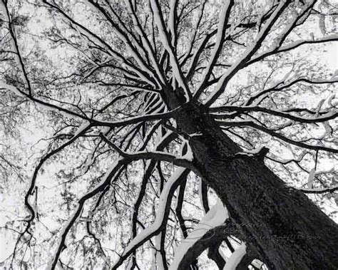 tree photo black white abstract fine art print top