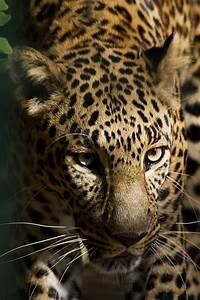 Schöne Bilder Kaufen : sch ne natur foto bild tiere zoo wildpark falknerei s ugetiere bilder auf fotocommunity ~ Orissabook.com Haus und Dekorationen