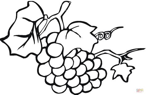 Kolorowanka Winogrona Z Liśćmi