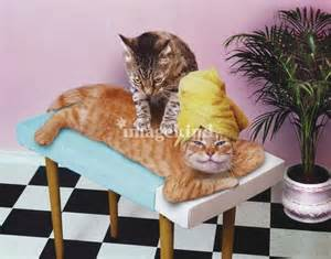 cat relax quot cat massagepaws and relax quot by lund