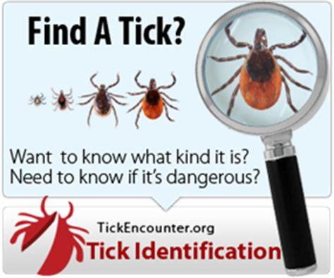 virginia lyme disease backyard bug patrol