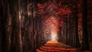 Wallpaper, Sunlight, Trees, Landscape, Fall, Leaves, Nature, Red, Sky, Wood, Branch, Evening