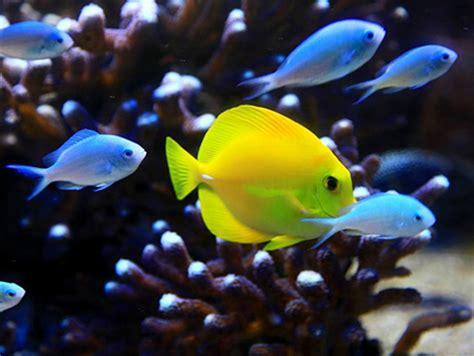 aquarium 7eme continent talmont hilaire cing la gach 232 re