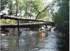 Explore the mystical NJ Pine Barrens on the Wading River