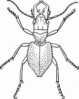 Bug Outline Insect Spider Coloring Clip Potato Beetle Vector Template Clipart Vectors Related Staghorn Pixabay Templates 1001freedownloads Tag Graphic sketch template