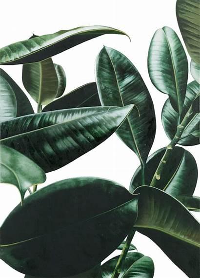Plant Plants Nature Transparent Pale Quiet Aesthetic