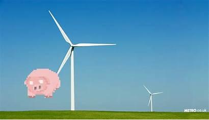Energy Gas Pig Poo Nose Eco Fuel
