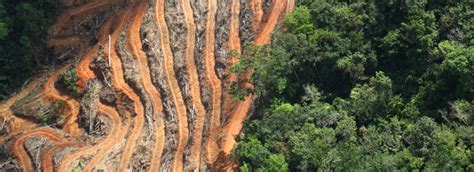 caign monitor templates deforestation ad caign companies are underestimating the risks of deforestation