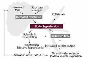 Portal Hypertension Pathophysiology 81320 | MEDIABIN