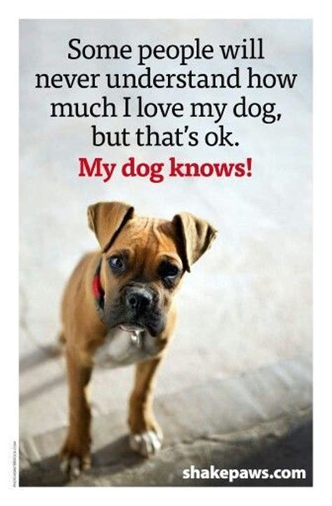 Boxer Dog Meme - 82 best quotes about pets images on pinterest thoughts animal quotes and pets