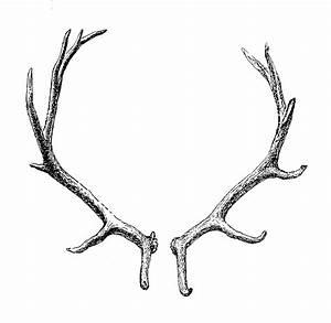 Reindeer Antler Horn Clip art - transparent png download ...