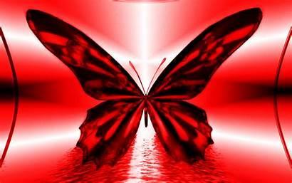 Butterfly Cool Abstract Wallpapers Monotone 1080p Definition