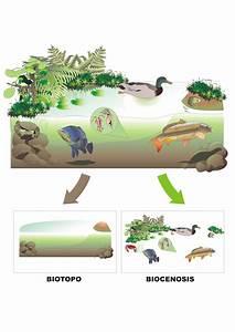 Ecosistemas Proyecto Educere