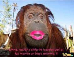 Las 8 mejores imágenes de Monos Chistosos Imagenes de