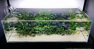 Urban Aquaria  32 Litre  U0026quot Bucephalandra Garden U0026quot  Tank