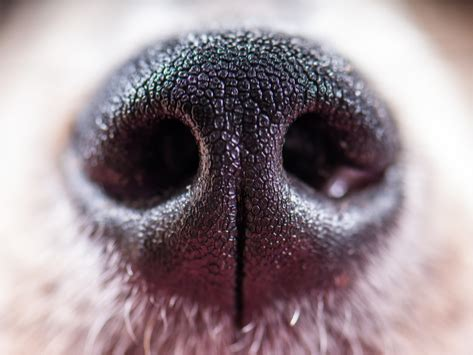 dogs  wet noses petmd