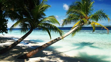 wallpaper maldives   wallpaper holidays palms