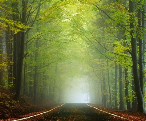 landscape nature road forest morning sunlight mist