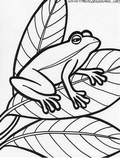 Frog Coloring Pages Printable Sheet Template Frogs