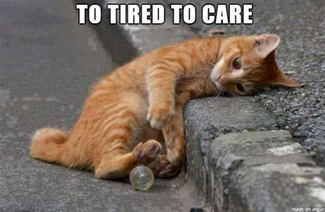 Tired Meme - 20 tired meme thug life meme