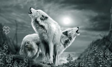 the white wolf ii by havizpm on deviantart