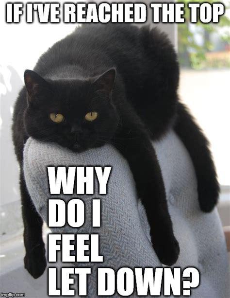 Feeling Down Meme - draped cat be like imgflip