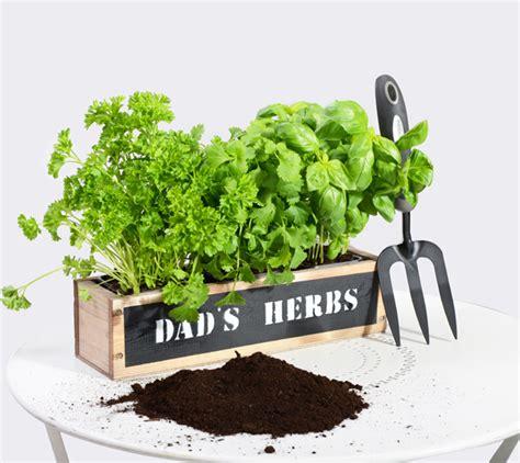 Windowsill Herb Planter by 34cm Herb Garden Windowsill Planter 163 9 99