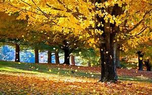 falling, autumn, leaves, image, -, id, , 30677