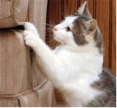 cat scratch resistant upholstery fabric