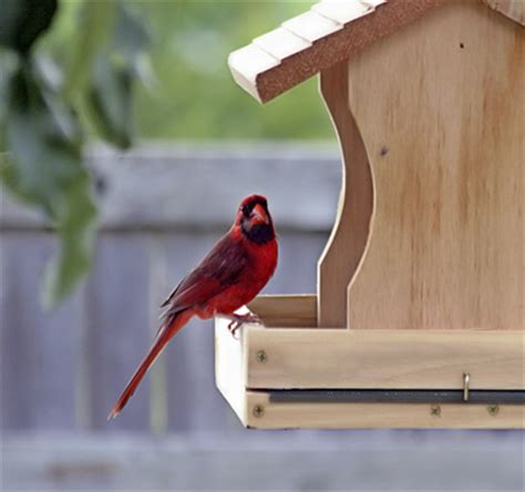 attracting birds to a new feeder askmax countrymax com