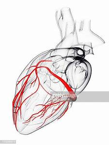 Coronary Artery Stock Illustrations And Cartoons
