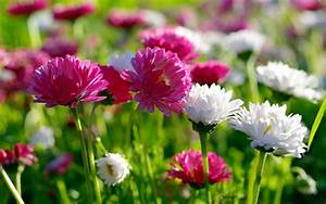 spring flowers | New Spring Flowers wallpaper download ...