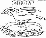 Crow Coloring Pages Colorings sketch template