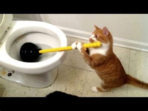 funny toilet cats   ultimate    laugh