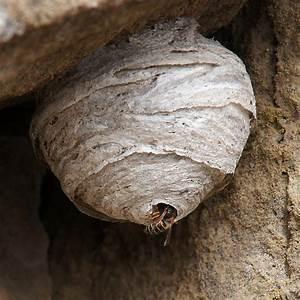 Mittel Gegen Wespen Im Dach : wespennest in der hauswand wespennest in der hauswand das hilft gegen wespen an der wand ~ Eleganceandgraceweddings.com Haus und Dekorationen