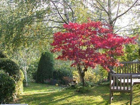 alberi da giardino piccolo creare un giardino con alberi caducifoglie alberi come