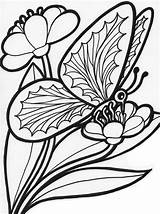 Coloring Butterfly Pages Printable Colouring Childrens sketch template