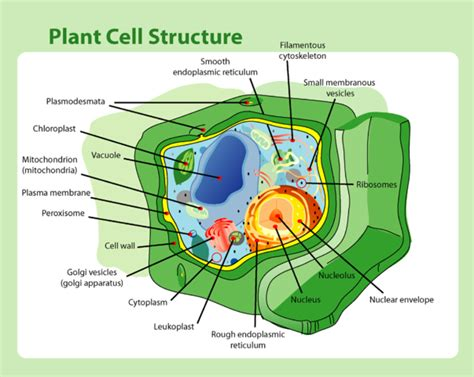 plant cell wall function structure composition video