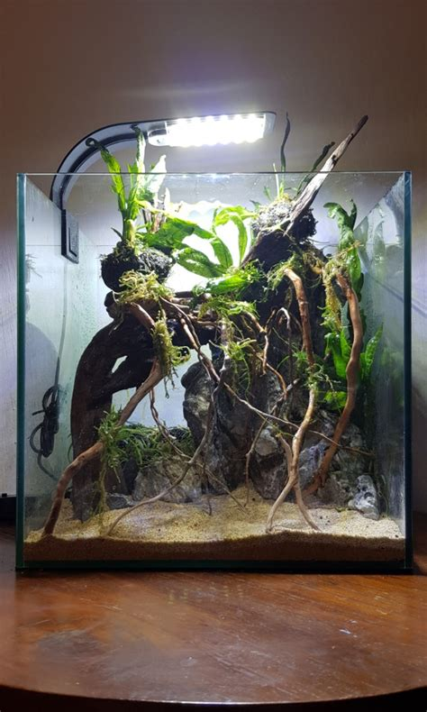 aquascape tank amazon theme shrimp fish supplies accessories pet carousell