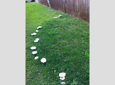 Mushroom rings invading your yard? Texas Plant Disease