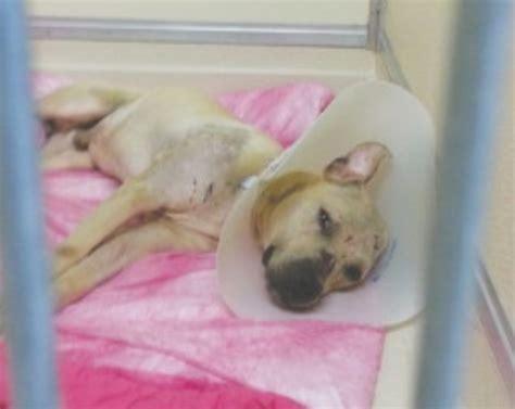 injured dog    month quarantine life  dogs