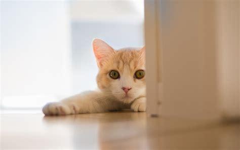 可爱猫咪电脑桌面壁纸 第8页zol桌面壁纸