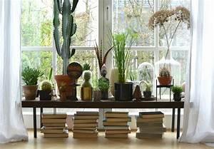 Pflanzen Für Wohnzimmer : aloe vera f r einsteiger wohnen in gr n wohnbuch ~ Markanthonyermac.com Haus und Dekorationen