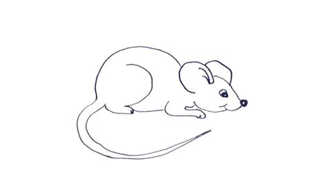 draw   mouse  ho  draw