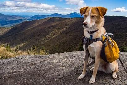 Hiking Dog Names Hike Instagram Inspired Adventure
