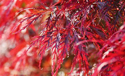 Laubbäume Garten Pflanzen by Laubbaum Pflanzen S 228 En Pikieren Selbst De