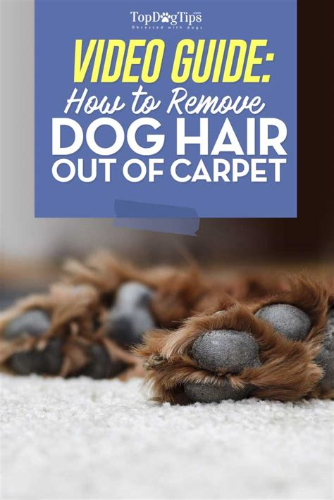 dog hair   carpet  video cleaning guide