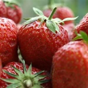 Welche Plissees Sind Die Besten : welche sind die besten erdbeersorten von morgen ~ Orissabook.com Haus und Dekorationen