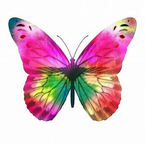 Bright Pink Butterfly Free Stock Photo - Public Domain